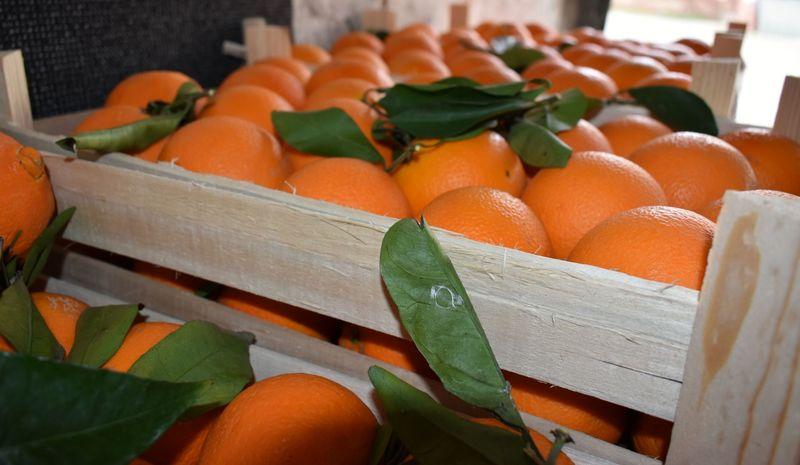 Orangenverkauf in der Pfarrscheune